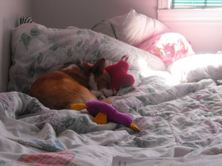 Napping on my bed *awwwww